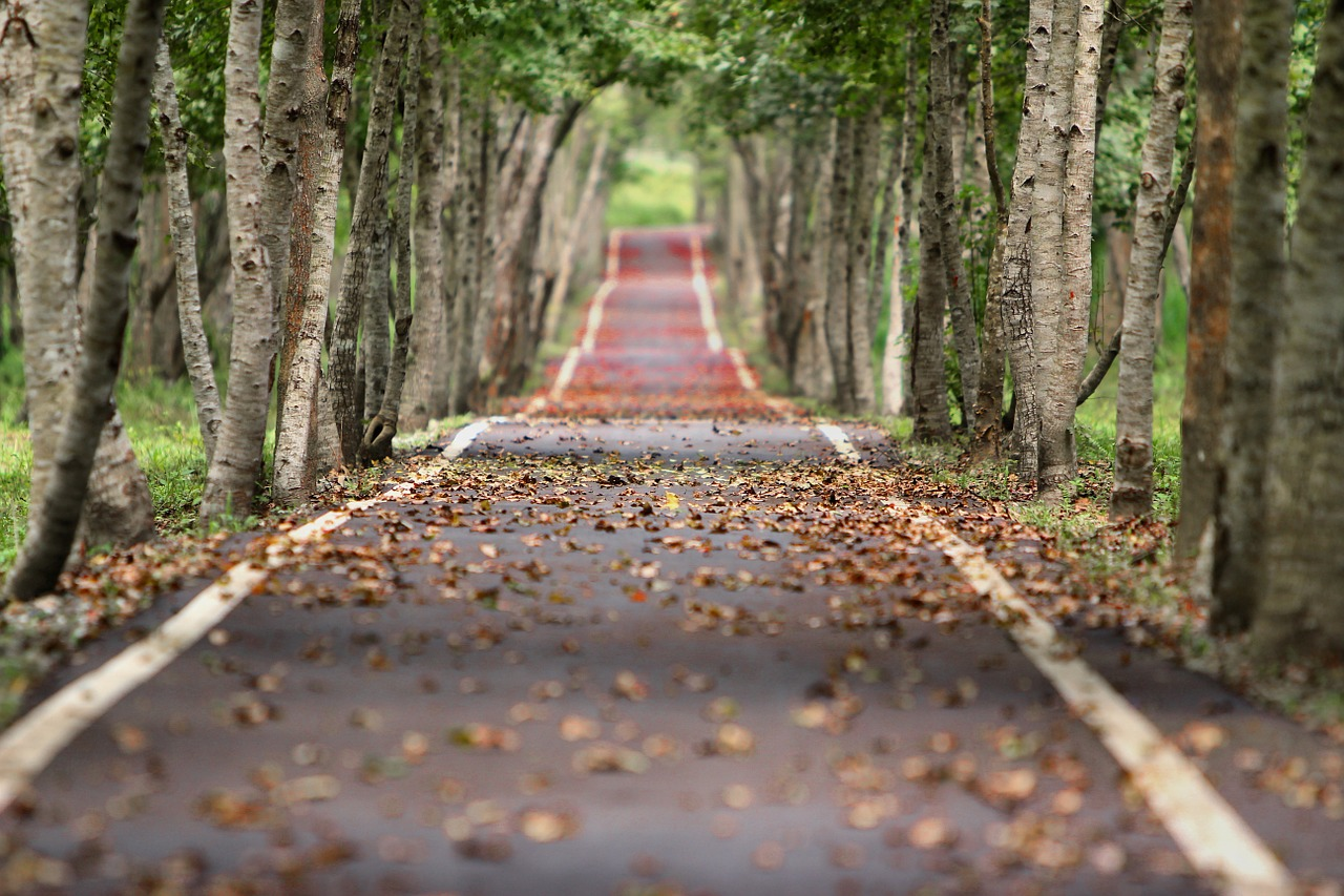 woodland trees and a leading path | Integrity Financial